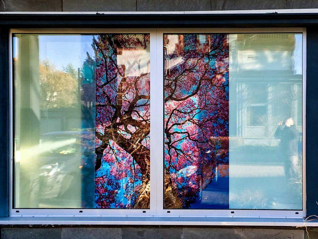 Showroom-Glas-Meissner-Kaiserslautern-06