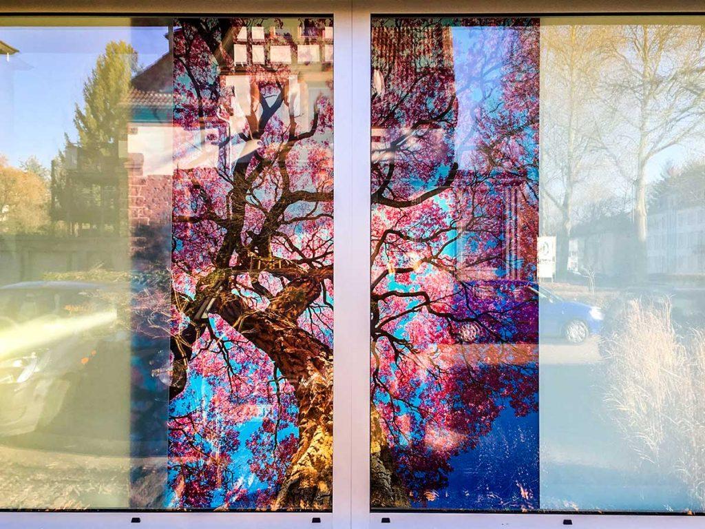 Showroom-Glas-Meissner-Kaiserslautern-07
